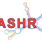 DASHR: a new database of small human non-coding RNAs