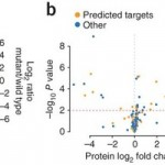 A Proteomics Approach to Validating microRNA Targets