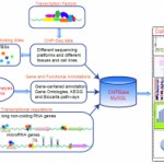 ChIPBase: decoding the transcriptional regulation of microRNA and lncRNA genes from ChIP-Seq data