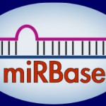 miRBase Version 19 released