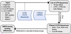 mrSNP workflow