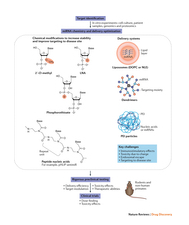 Summary of the key steps in the development of miRNA therapeutics.